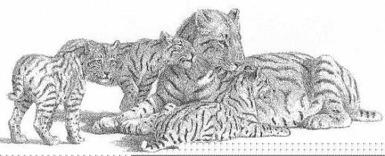 geschwindigkeit amur leoparden